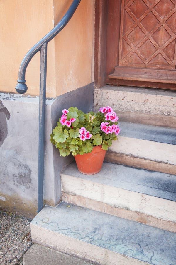 房子盆的植物前面  免版税库存图片