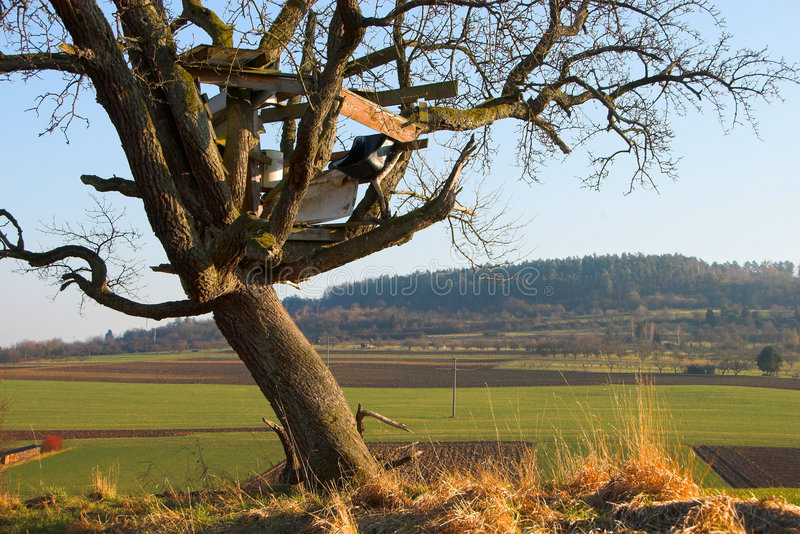 房子结构树 库存照片