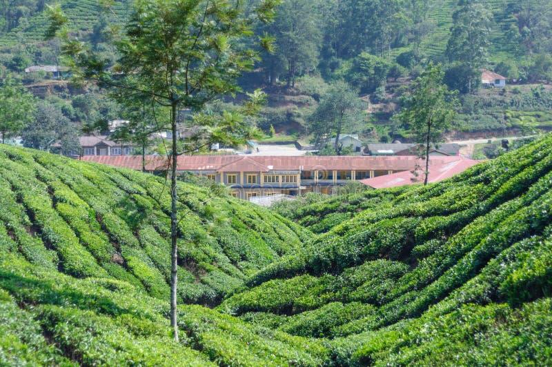 房子美好的风景看法茶领域的在Munnar,喀拉拉,印度附近的山 免版税库存图片