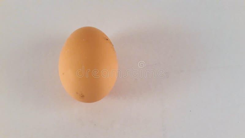 房子鸡蛋 免版税库存照片