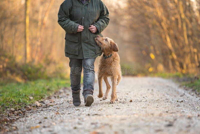 所有者和狗通过森林走 免版税库存图片