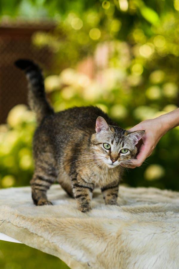 所有者拥抱的猫在夏天自然背景中 免版税图库摄影