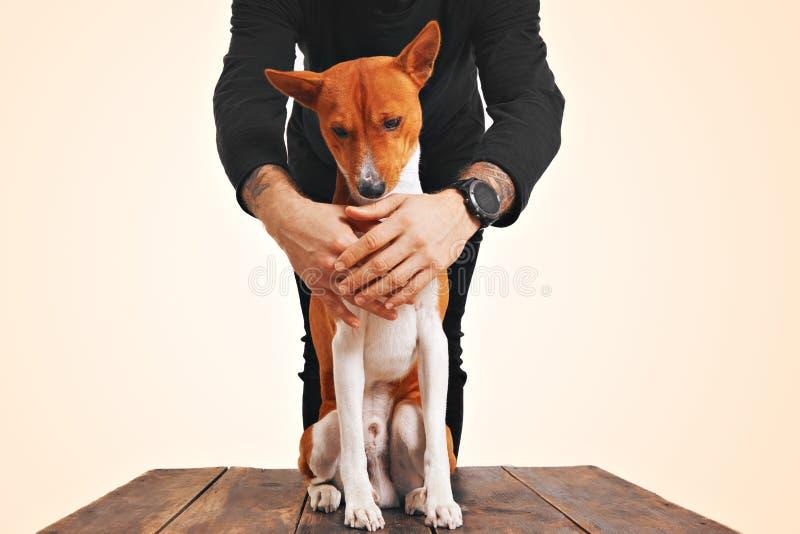 所有者拥抱的Basenji狗 免版税图库摄影