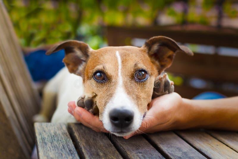 所有者爱犬 免版税库存照片