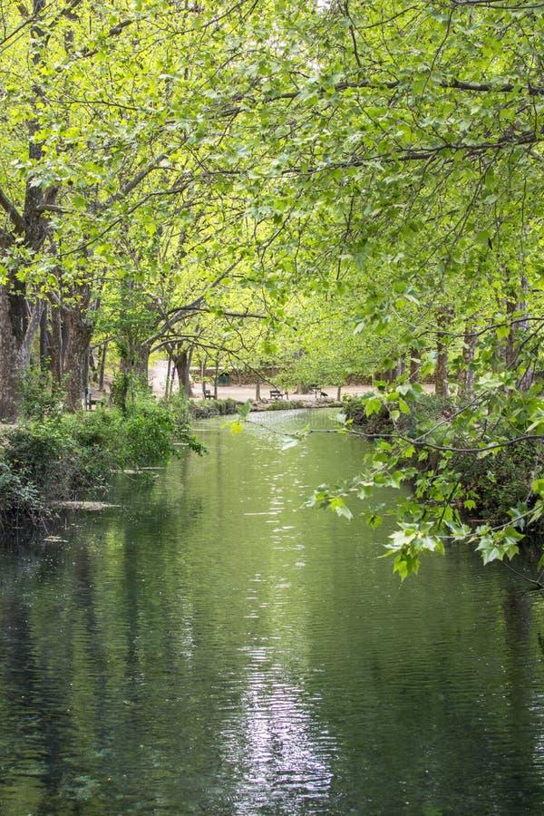 扁桃在河反射了 免版税库存照片