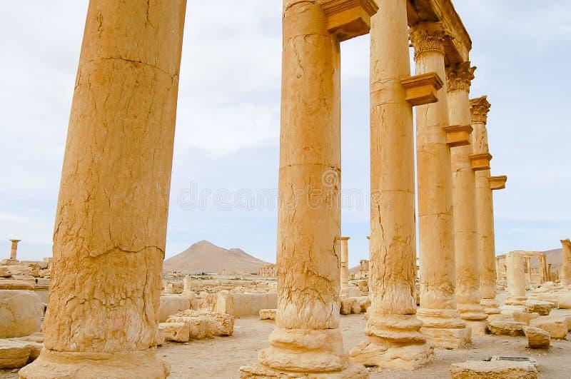 扇叶树头榈废墟-叙利亚 库存照片