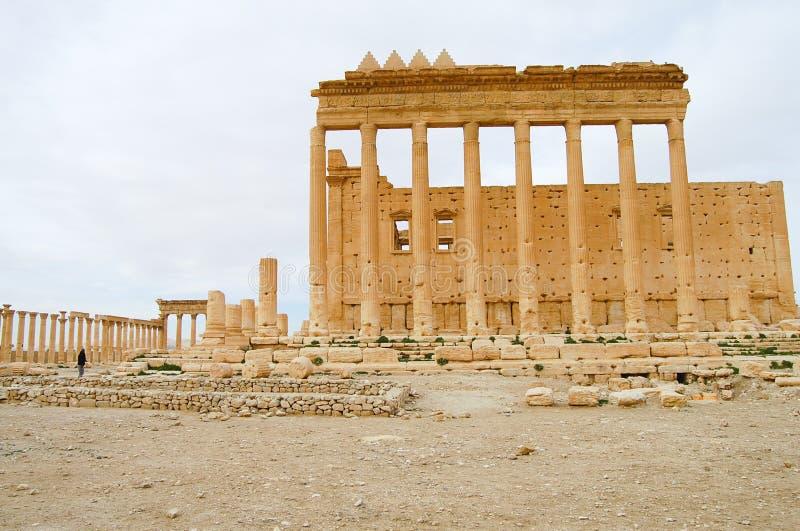 扇叶树头榈废墟-叙利亚 库存图片