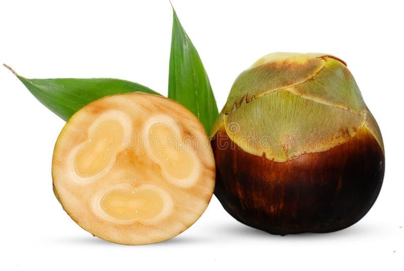 扇叶树头榈棕榈、在白色隔绝的棕榈汁或者桄榔果子 免版税图库摄影