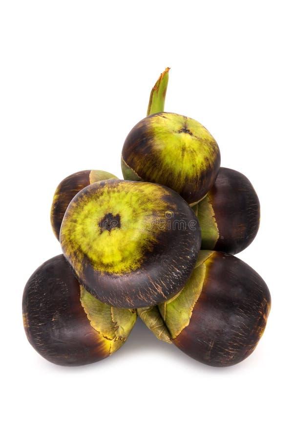 扇叶树头榈棕榈坚果  免版税库存照片