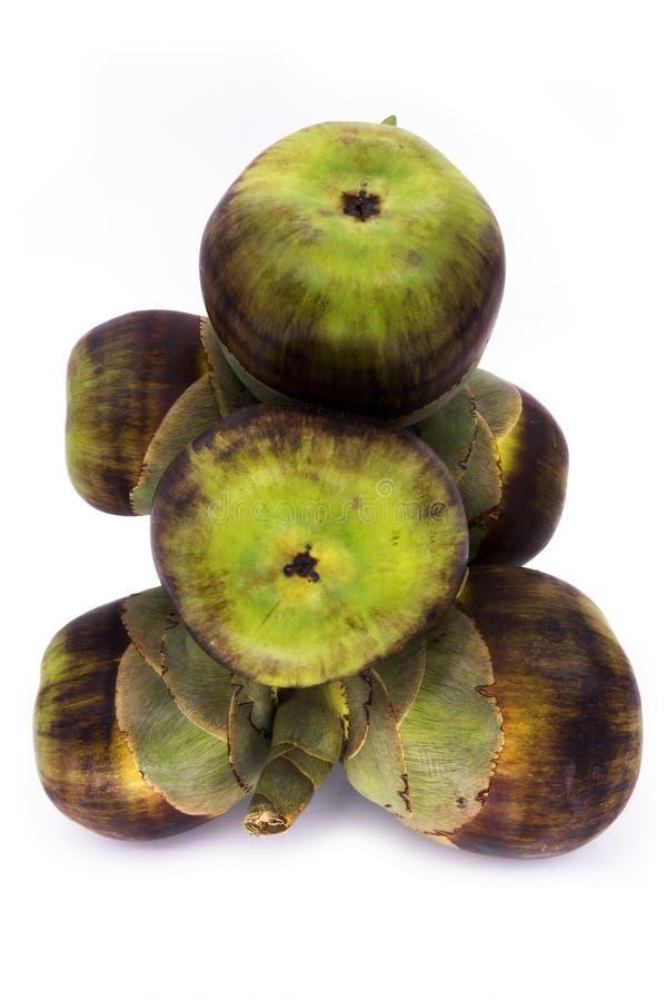 扇叶树头榈棕榈坚果  免版税库存图片