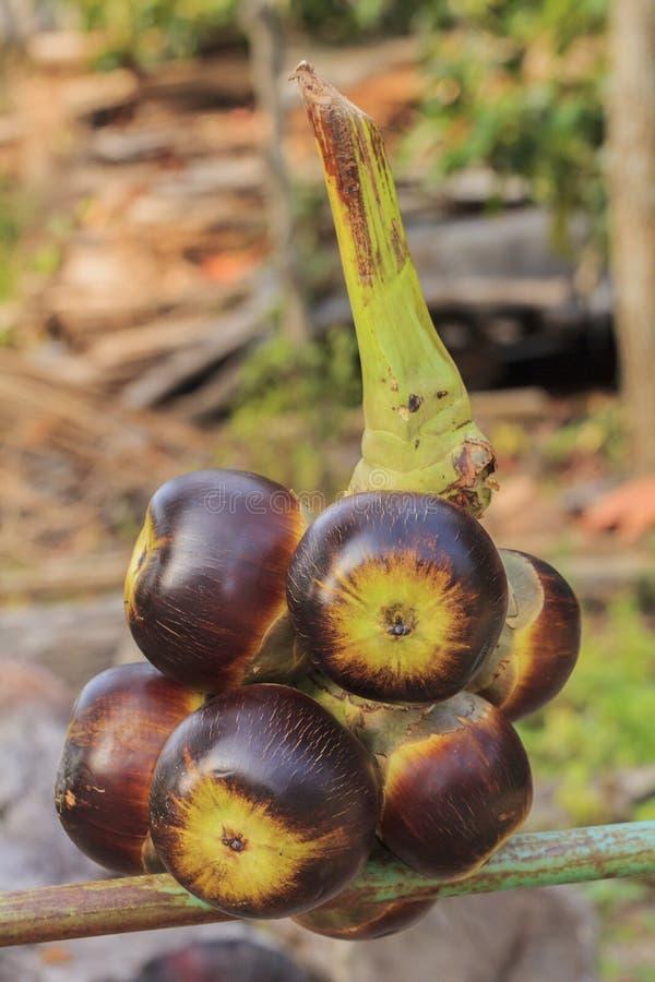 扇叶树头榈棕榈果子 库存图片