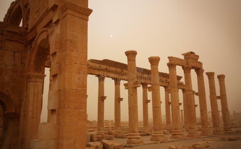 扇叶树头榈破坏叙利亚 库存图片