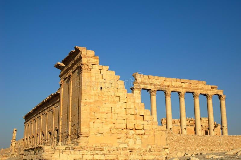 扇叶树头榈站点叙利亚 免版税库存图片