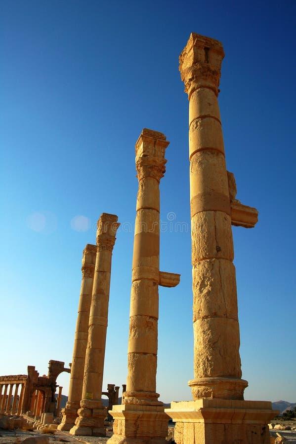 扇叶树头榈站点叙利亚 库存照片