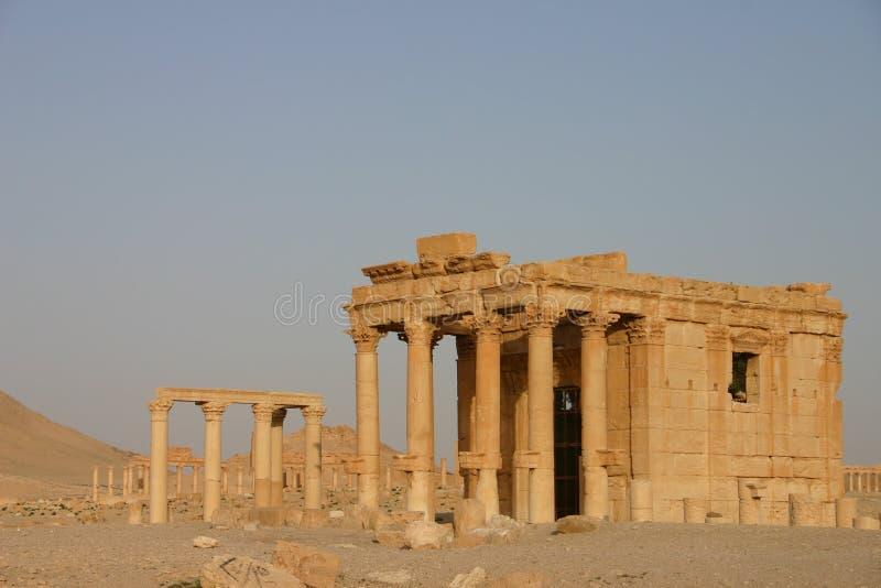 扇叶树头榈罗马废墟 库存图片