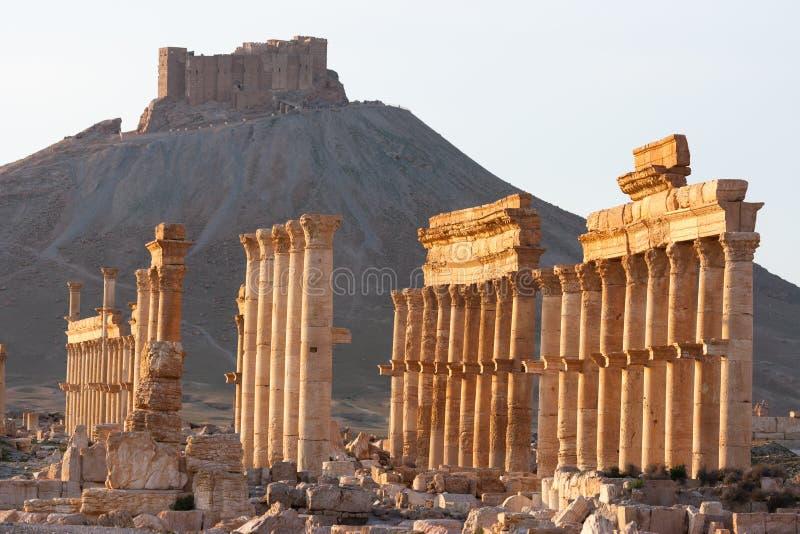 扇叶树头榈,叙利亚古老废墟  免版税库存图片