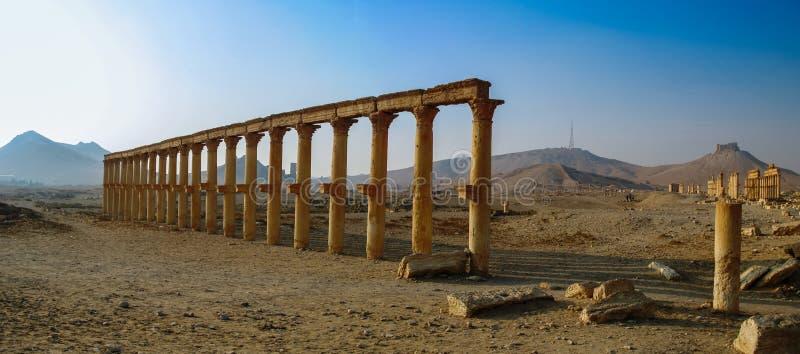 扇叶树头榈专栏和古城,叙利亚全景  库存图片