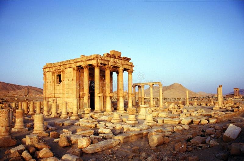 扇叶树头榈废墟在叙利亚 免版税库存图片