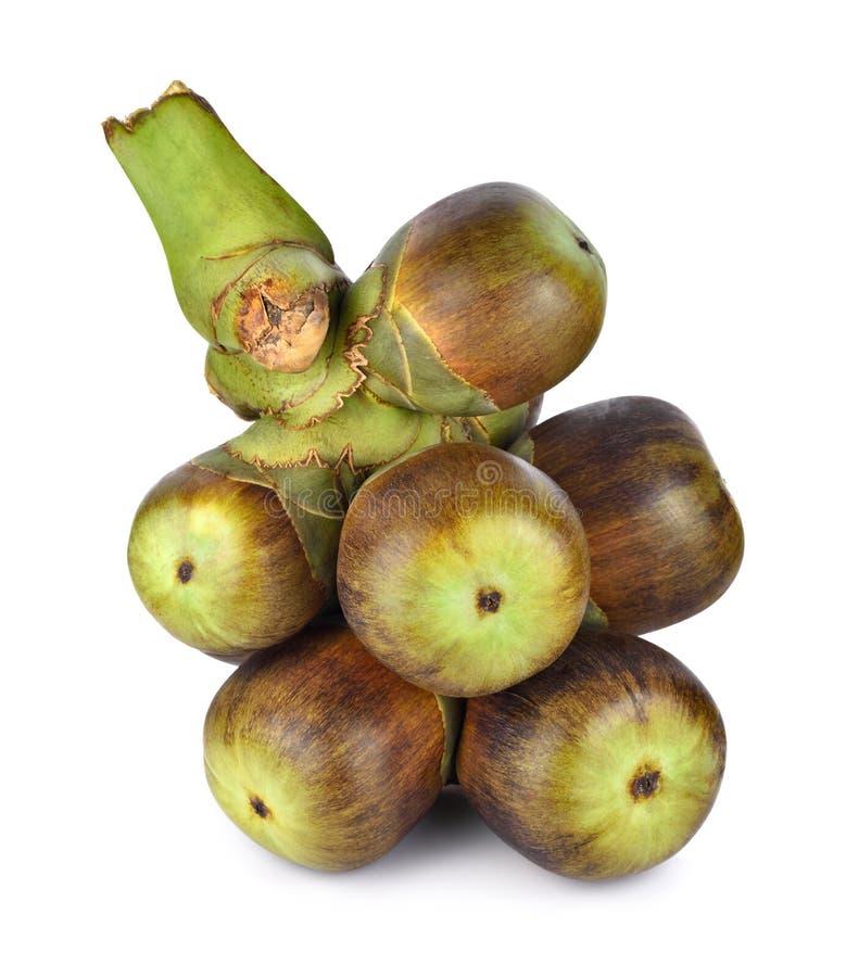 扇叶树头榈棕榈& x28; 热甜酒palm& x29;隔绝在白色背景 库存图片