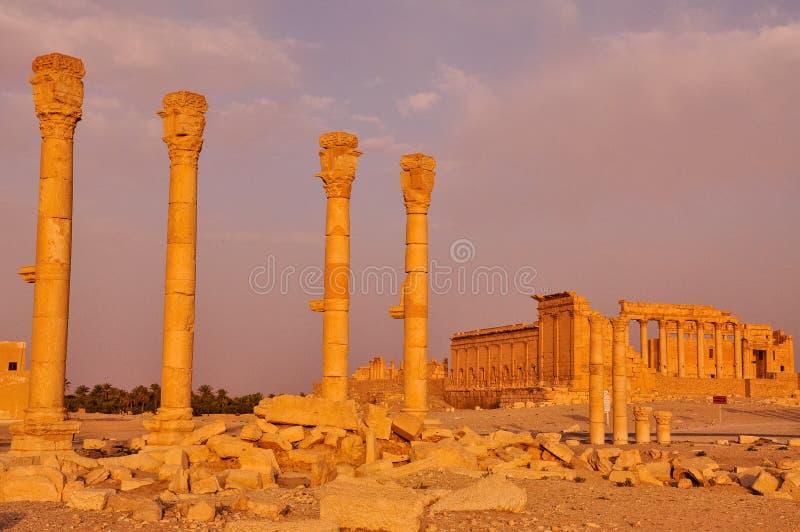 扇叶树头榈,叙利亚的古老专栏 免版税库存图片