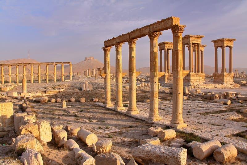 扇叶树头榈,叙利亚:扇叶树头榈考古学站点  免版税库存照片