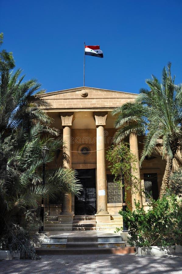 扇叶树头榈,叙利亚 库存图片