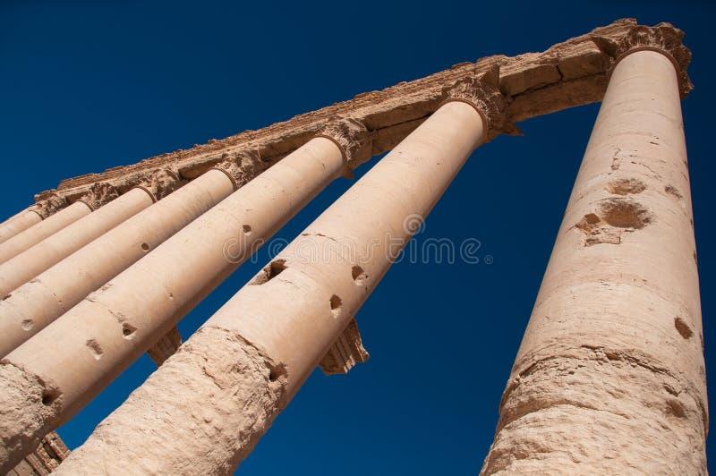 扇叶树头榈,叙利亚 图库摄影