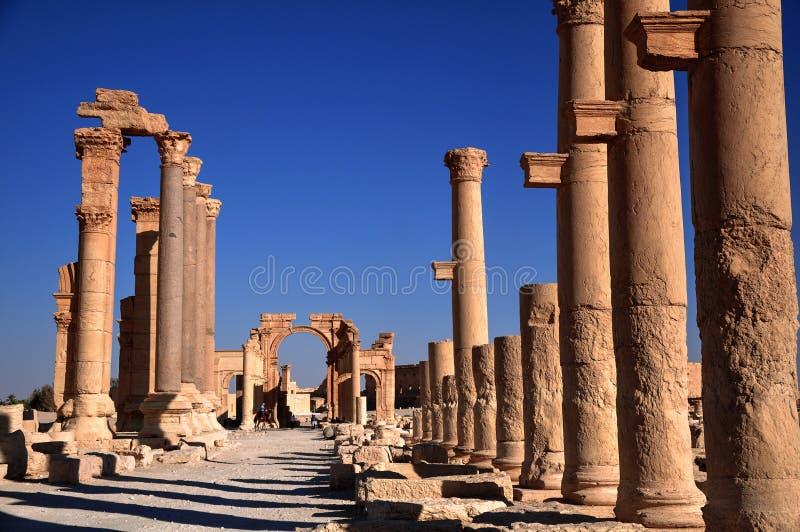 扇叶树头榈,叙利亚 免版税库存照片