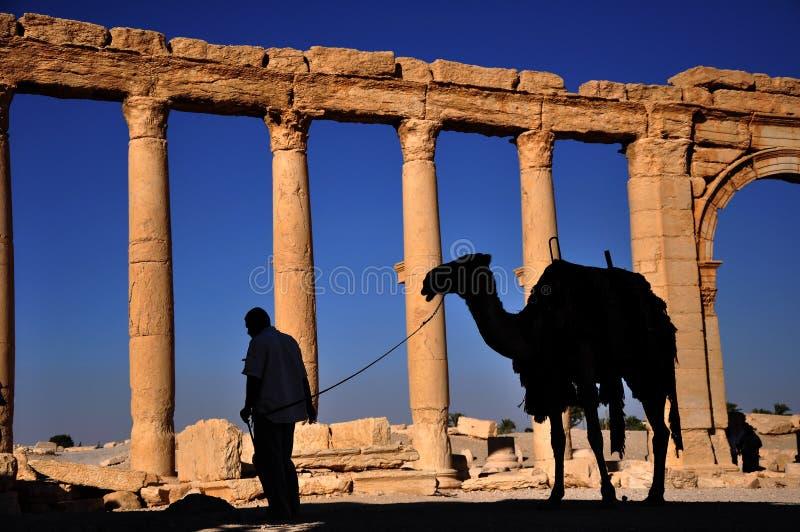 扇叶树头榈,叙利亚 免版税库存图片