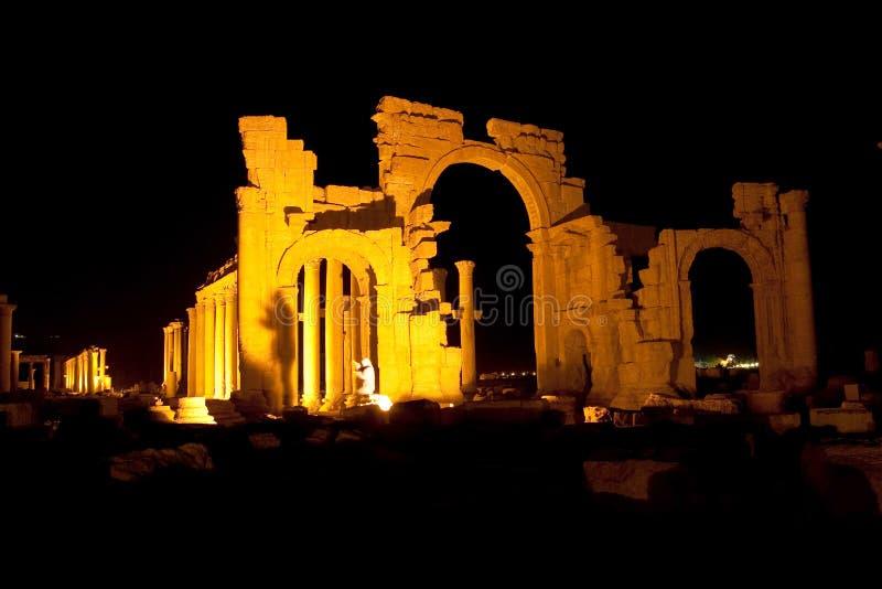 扇叶树头榈-叙利亚古城废墟  库存照片