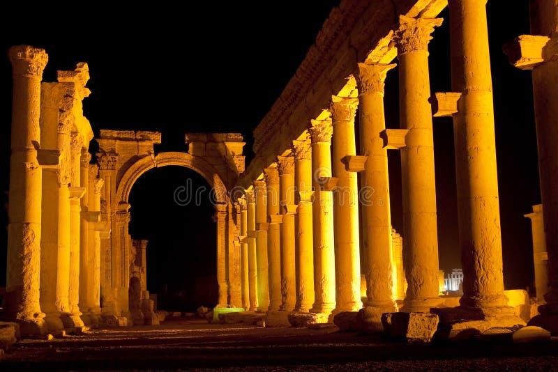 扇叶树头榈-叙利亚古城废墟  免版税图库摄影
