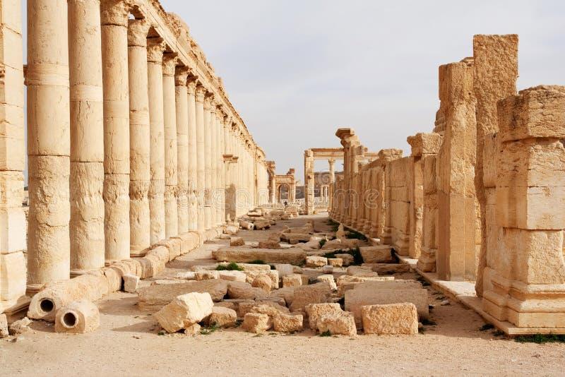 扇叶树头榈-叙利亚古城废墟  免版税库存照片