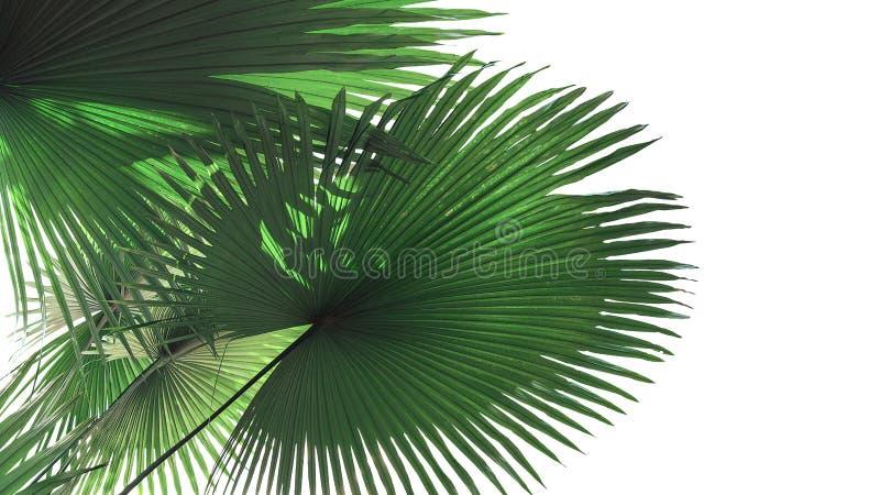 扇形绿色离开与大而无用的东西的光和阴影 免版税库存图片