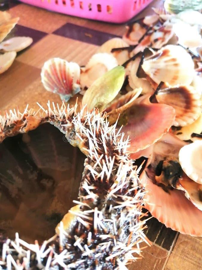 扇贝和海胆,伊斯拉癸干忒斯,伊洛伊洛省 免版税图库摄影