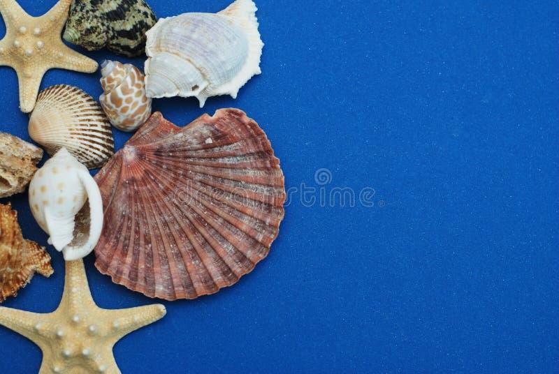 扇贝壳和海星在深刻的蓝色背景 关闭上色百合软的查阅水 夏天和Holliday概念 复制空间 库存照片