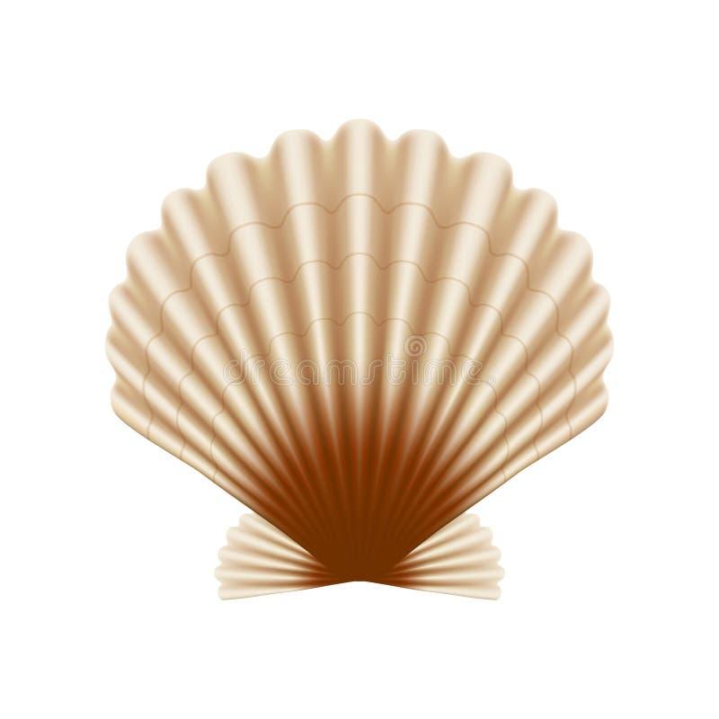 扇贝海壳 向量例证