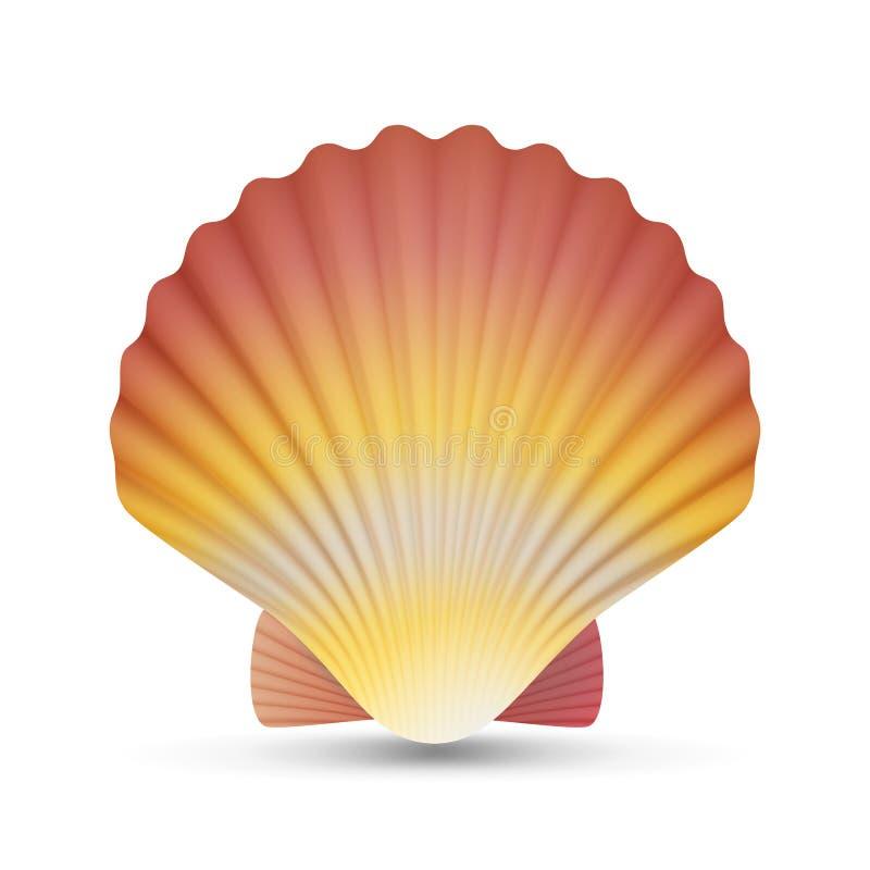 扇贝贝壳传染媒介 在白色背景例证隔绝的现实扇贝壳 皇族释放例证