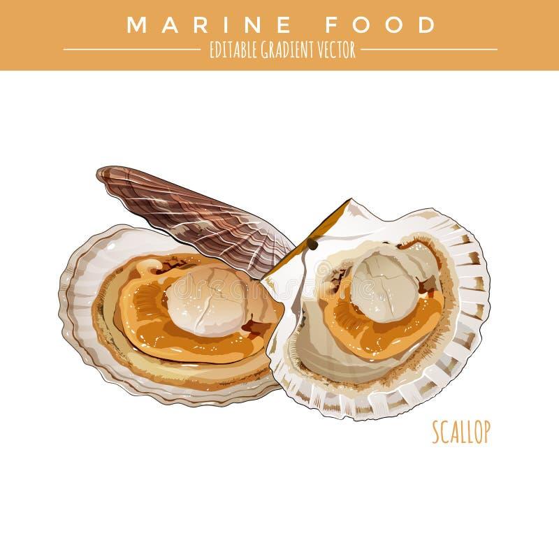 扇贝 海洋食物 向量例证