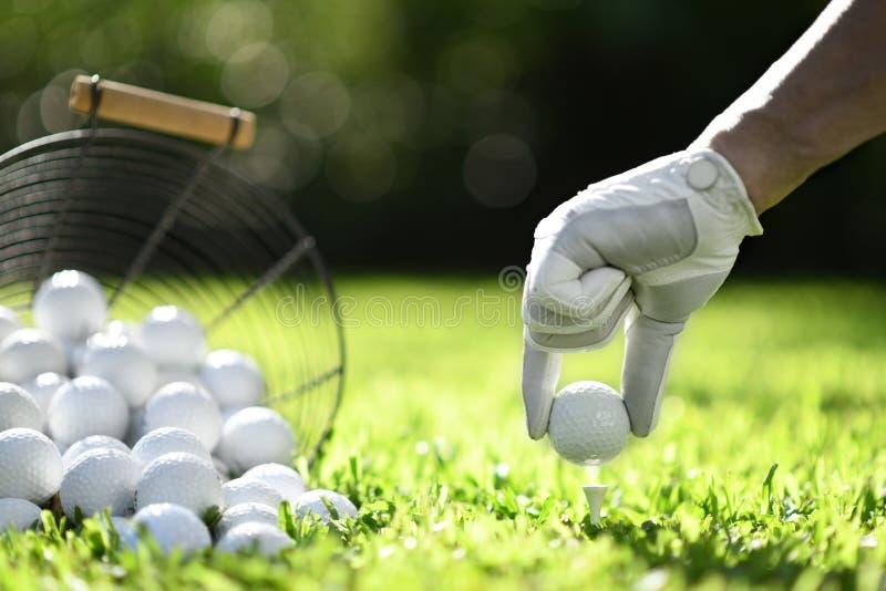 手举行与发球区域的高尔夫球在实践的绿草 免版税库存图片