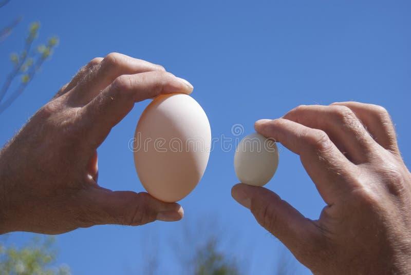 手举行两鸡蛋:鹅和鸽子 库存图片