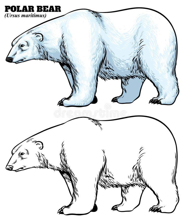 手北极熊图画样式  皇族释放例证