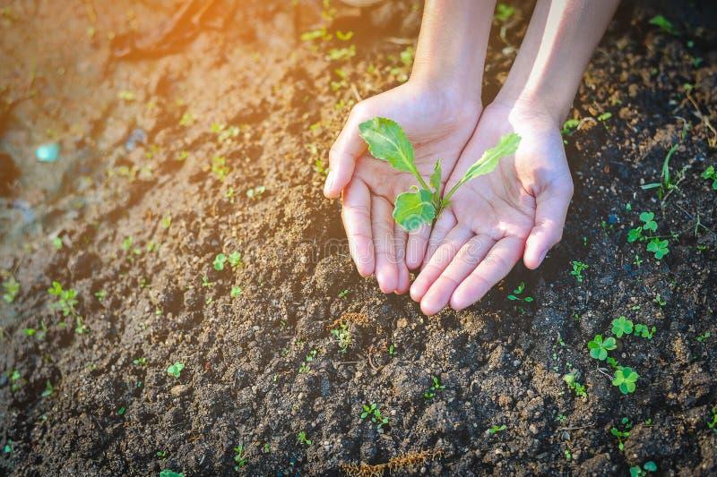 手和幼木创造小价值 库存照片