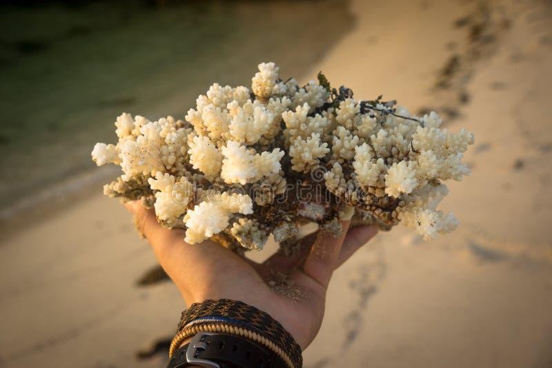 手和珊瑚在它上 库存照片