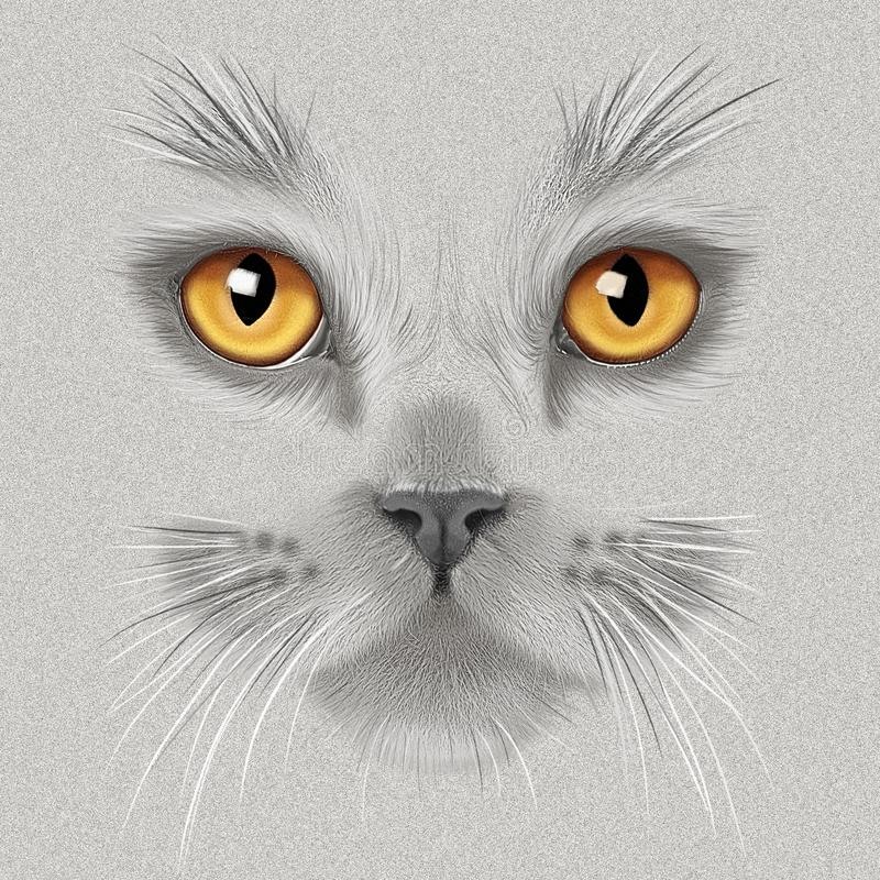 手图画画象一只灰色英国猫 库存例证