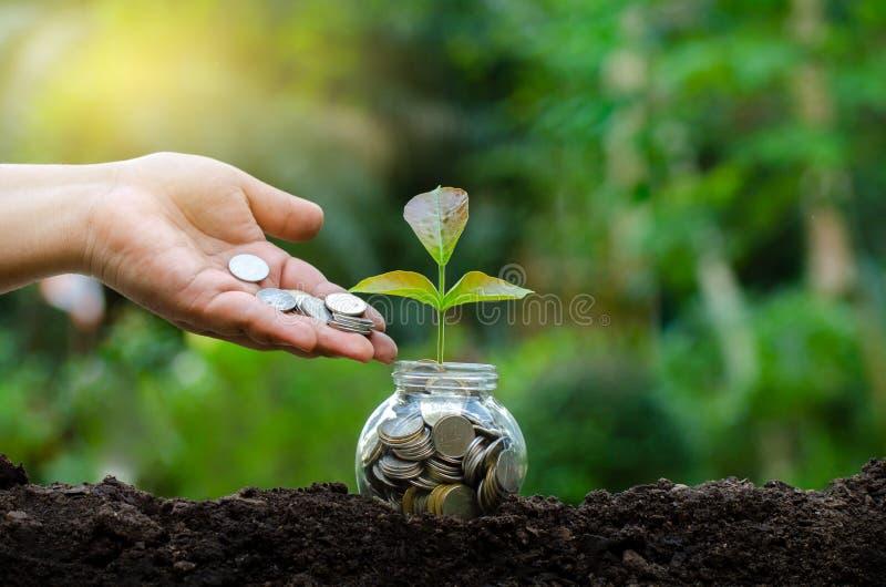 手在企业绿色自然本底金钱savi的上面投入了金钱瓶钞票钞票的树图象与生长的植物的 免版税库存图片
