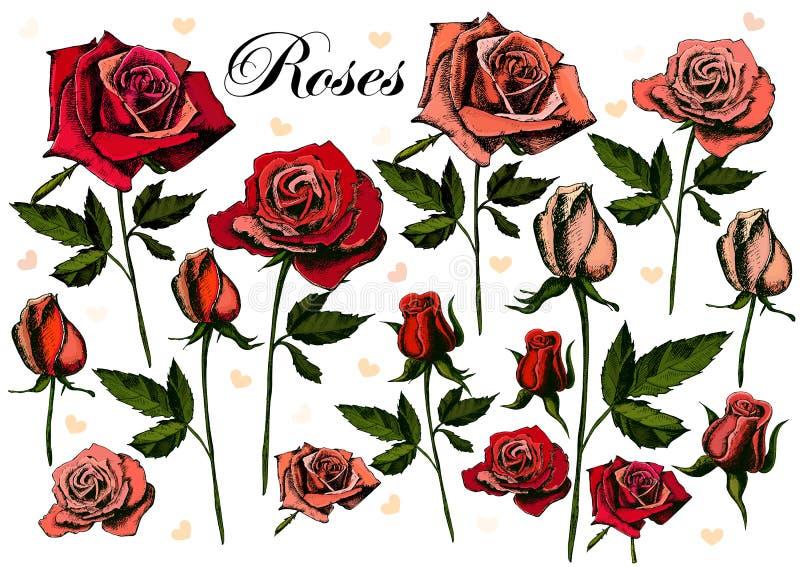 手在白色背景的图画玫瑰 向量例证