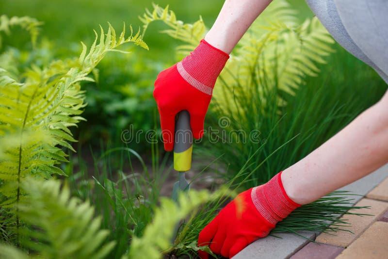 手套的妇女手照片有去除杂草的工具的从土壤 免版税库存照片