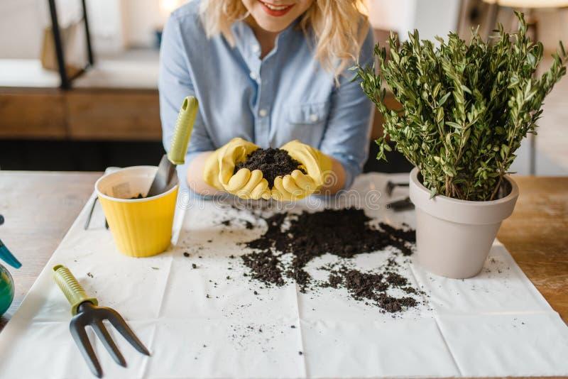 手套的妇女拿着堆家庭植物的泥煤 图库摄影