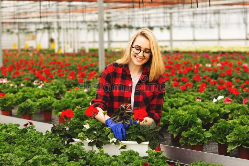 手套的年轻女性花匠运作自温室,种植和照料花 免版税库存图片