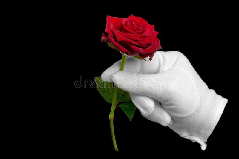 手套红色玫瑰白色 库存图片